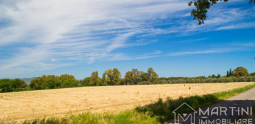Plot of Land for Sale in Scarlino
