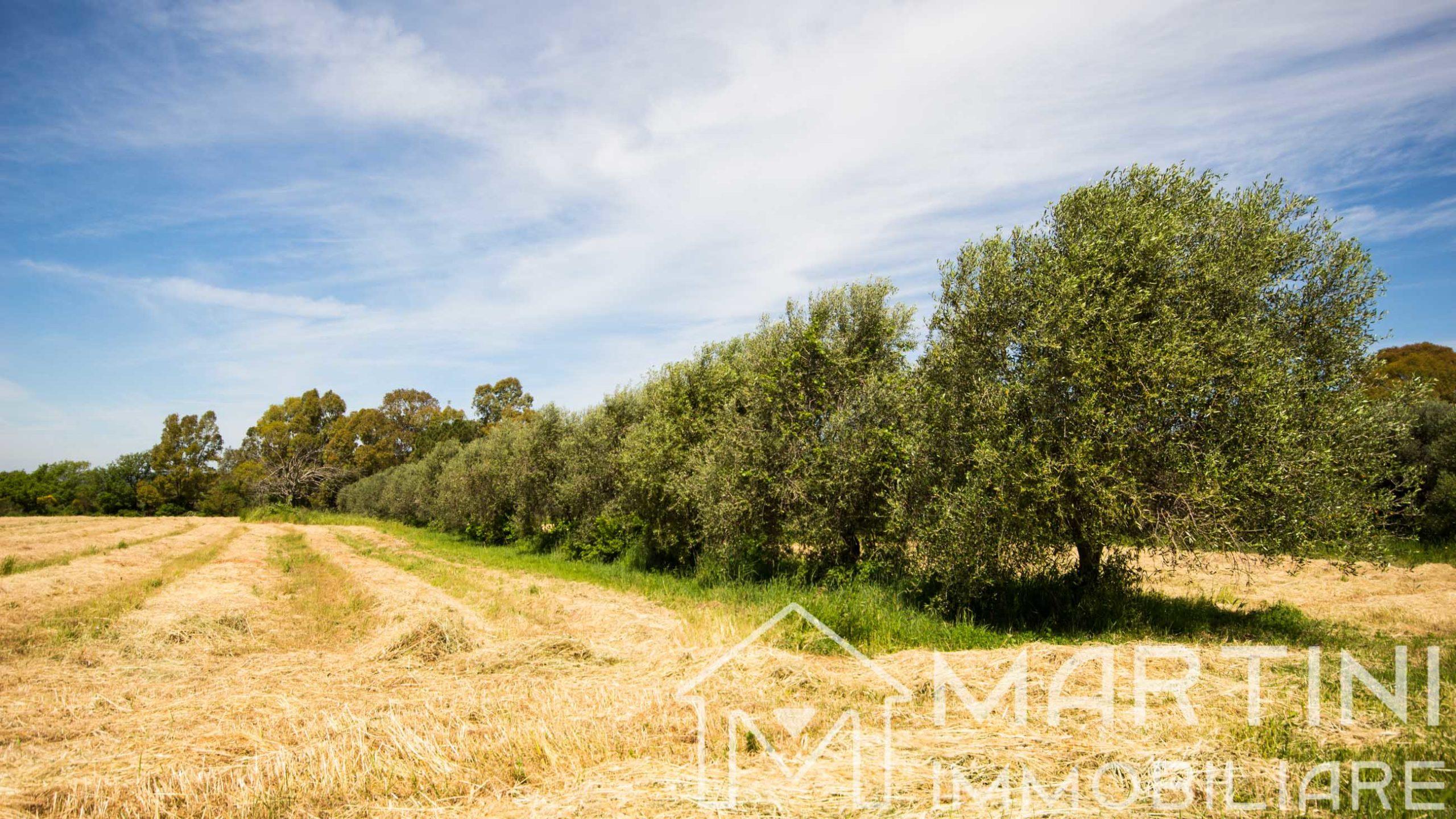 Terreno Agricolo in Vendita a Scarlino