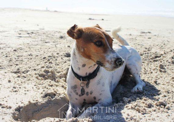 Cani in spiaggia a Follonica? Si può. Ecco come